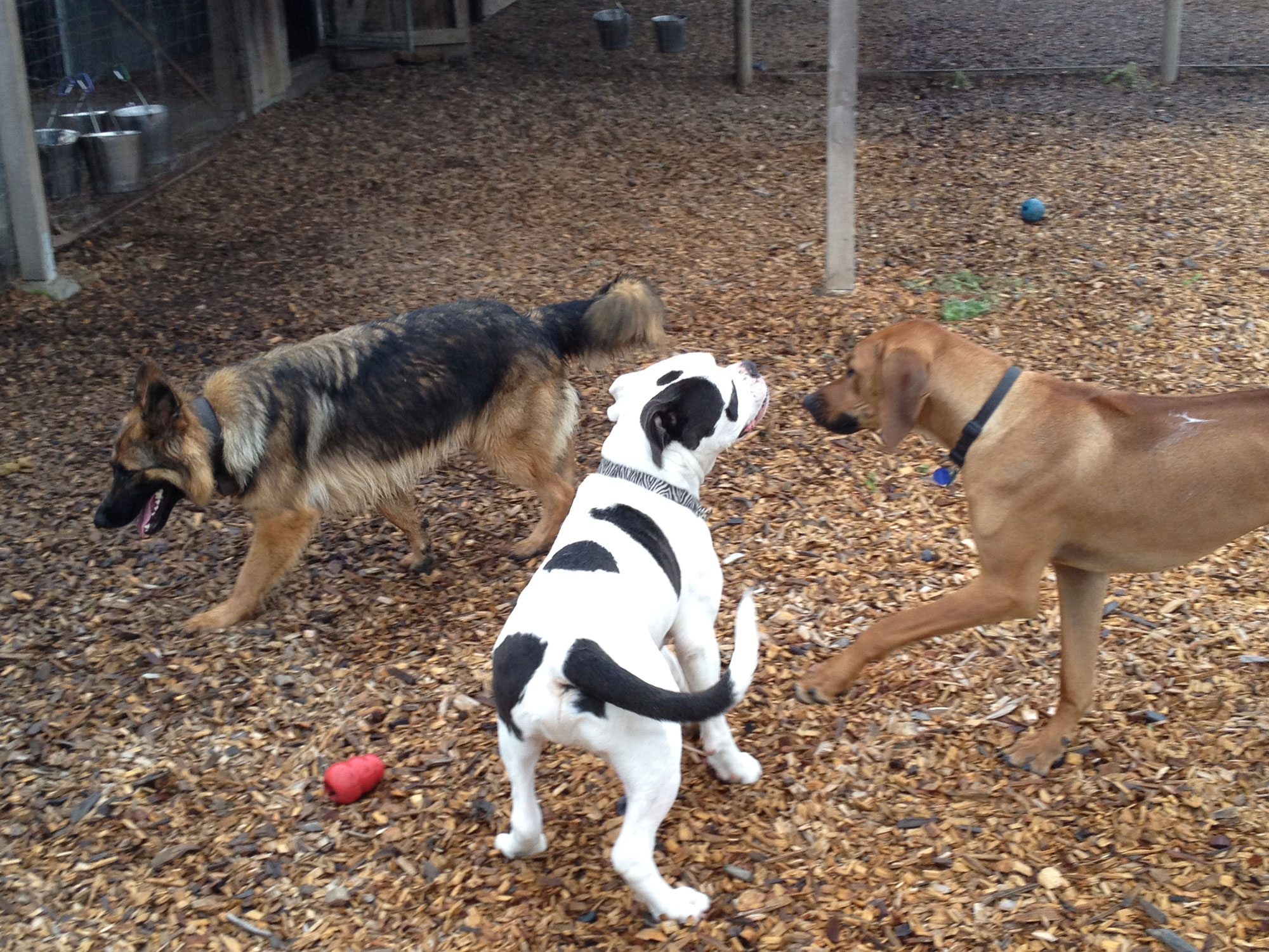 doggy boot camp play time